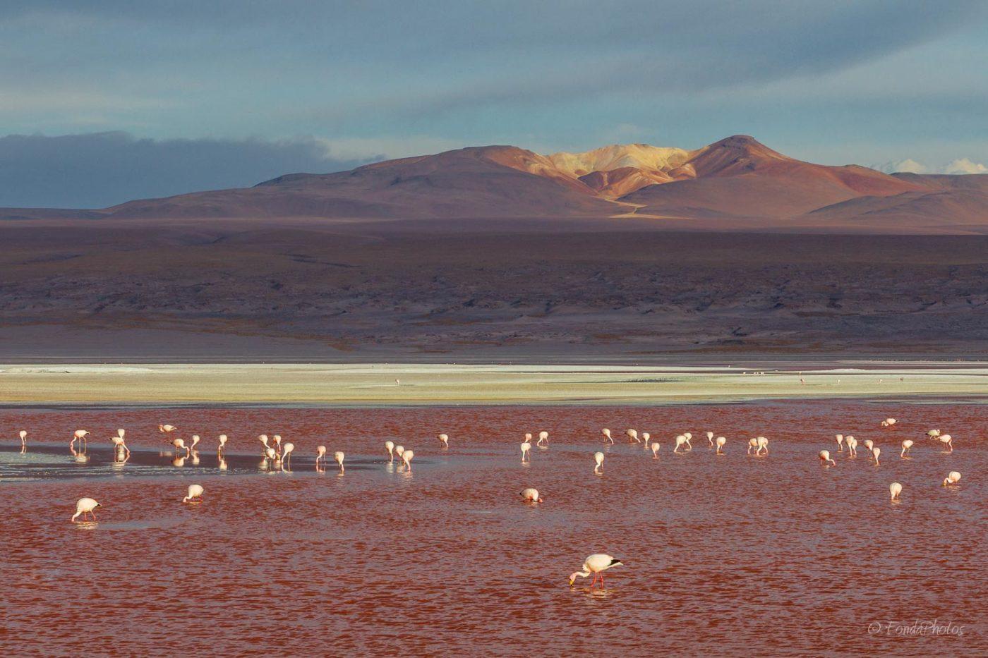 Laguna Colorada, Bolivia