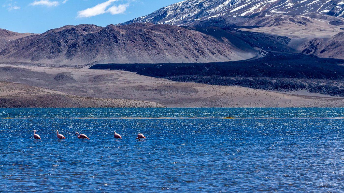 Lago Chungara
