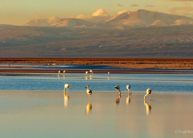 Laguna de Chaxa, Salar de Atacama